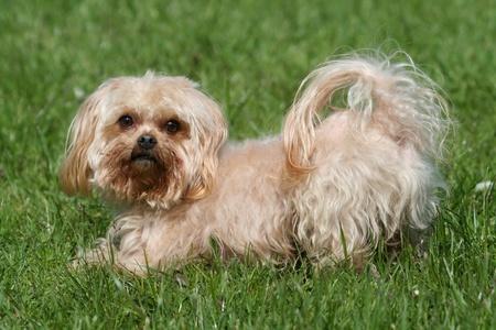 pedigree dog Stock Photo - 11833610