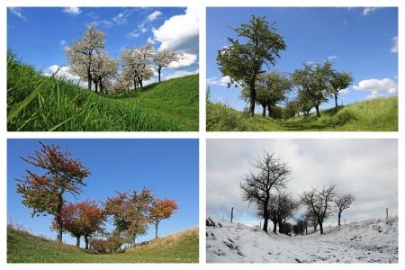 Cuatro temporadas collage, Cerezos Foto de archivo