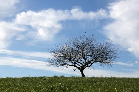arbre fruitier: arbre fruitier unique avec un ciel nuageux