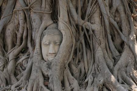 cabeza de buda: Cabeza de Buda en el �rbol