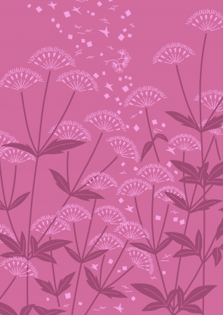 asteraceae: graphic patterns