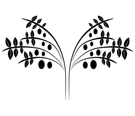 antioxidant: olives on white background