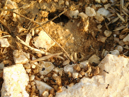 anthill: anthill outdoors