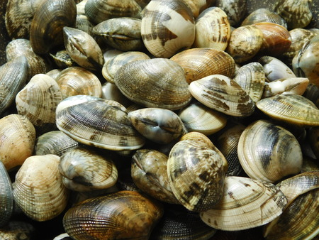 clams: clams to eat Stock Photo