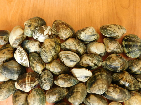 clams: clams on a wooden base Stock Photo