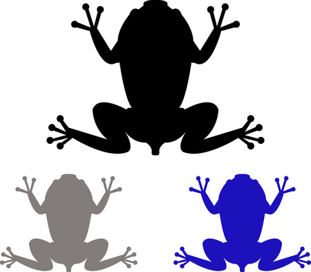 natures: frogs illustration on a white background