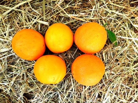 naranjas: oranges