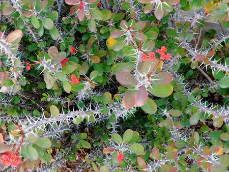 thorny: thorny plants