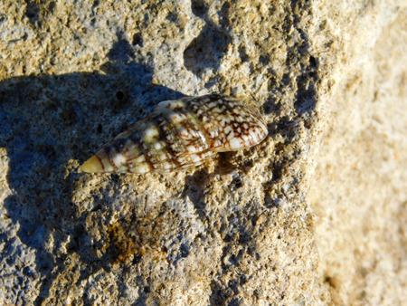 molluscs: molluscs to sea