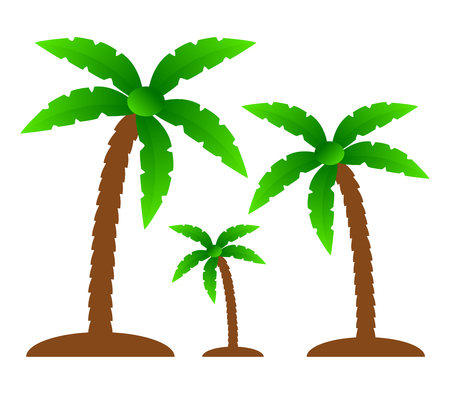 natures: palm trees on a white background