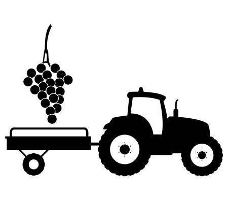grape harvest: grape harvest