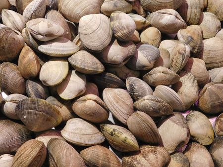texture of clams