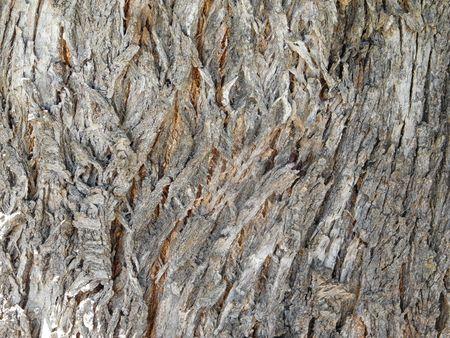 Texture of tree trunk Stock Photo