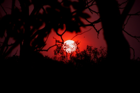 reverberation: Sunset see trought trees in Australia Stock Photo