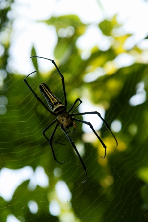 a big spider on the web in China photo