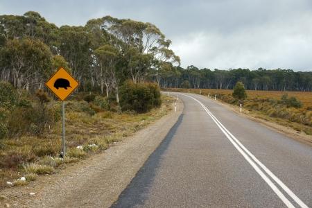 echidna: Echidna sign in a country road in Australia