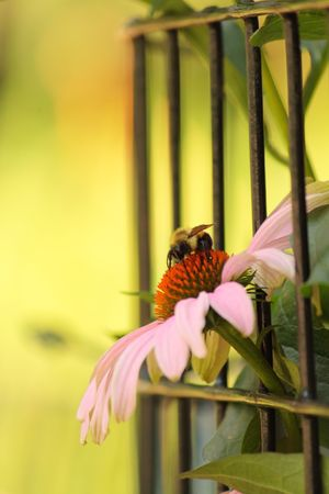 Flower and bee Stock Photo - 5315067