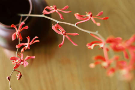 Red orchid in the vase Stock Photo - 13614058