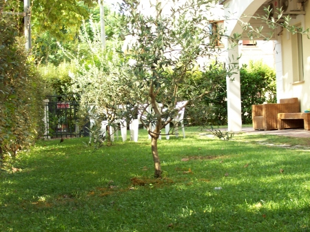 small plants in a garden with olive photo