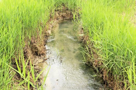 small irrigation ditch