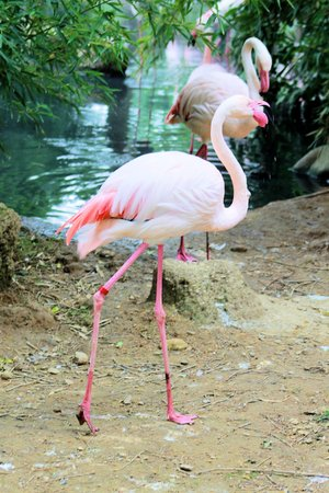 pink flamingo Stock Photo - 28367581