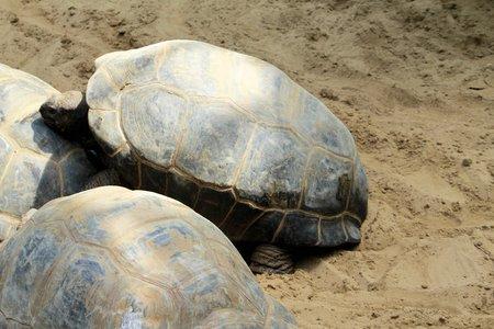 tortoise of seychelles photo