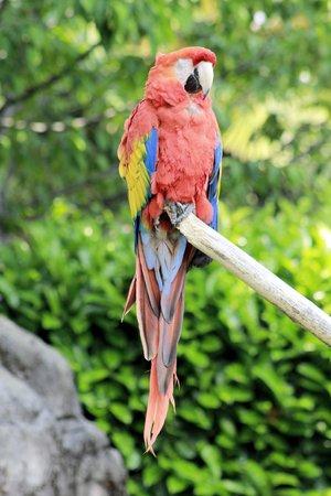 macaw parrots photo