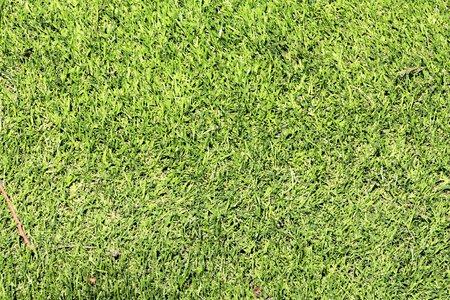 background  grass: background grass golf course