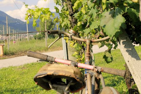 old bike in the vineyard photo