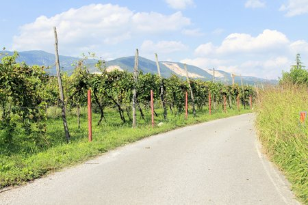 rural road photo