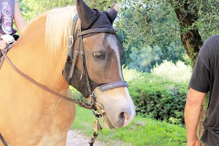 brown horse during a riding lesson photo