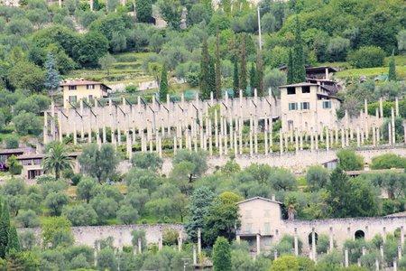 Lemon plantation  on  Garda lake in Italy photo