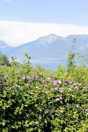 folwer: landscape of  Garda lake in northern Italy Stock Photo