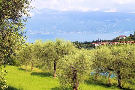 olive grove on Garda lake in northern Italy Stock Photo