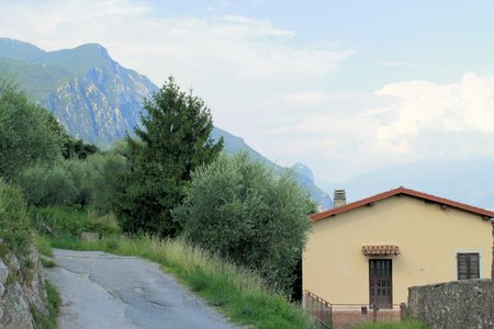 hause: olive grove on Garda lake in northern Italy Stock Photo
