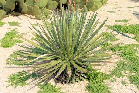 prickly cactus, exotic plants photo