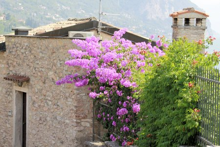 hause: home with bougainvillea flower