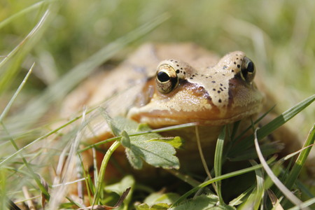 toad in the grass Stock Photo
