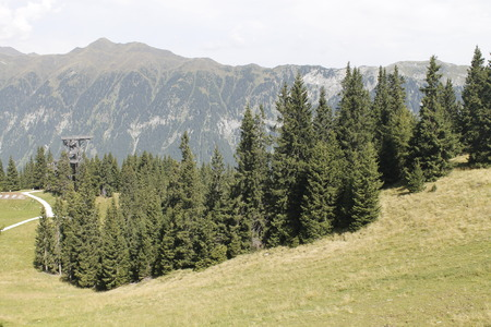 woods in the alpine mountains
