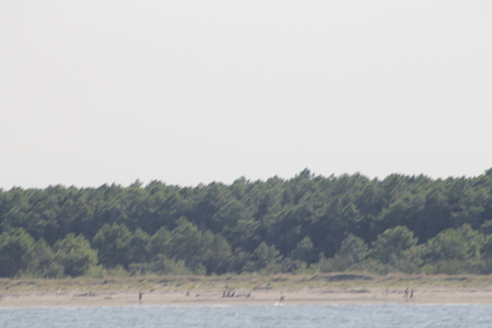 sandy beach with trees on the Adriatic sea in Ravenna in Italy