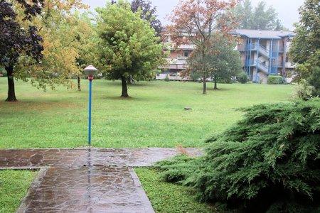 rain in the park