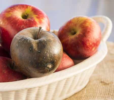 uneatable: rotten apple in a ceramic basket