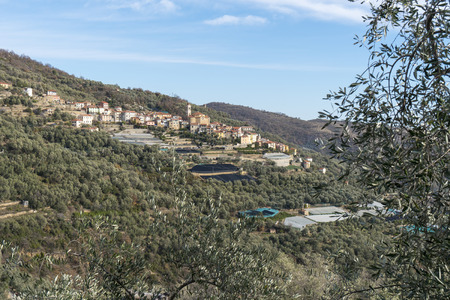 Cultivation of olive trees and the village of Pietrabruna (Liguria, Italy) in the background. Mediterranean region, Ligurian Riviera.