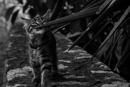 Cat walking on a wall, caressing leaves, captured in black and white Stok Fotoğraf