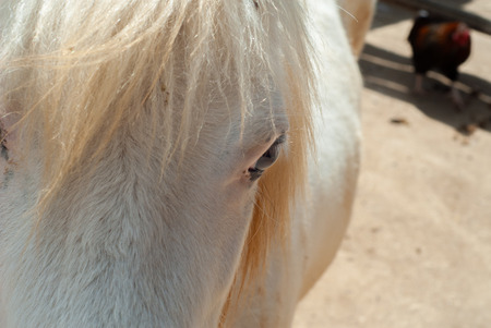 Detail of the eye of a young horse with white fur, in its courtyard Stock Photo