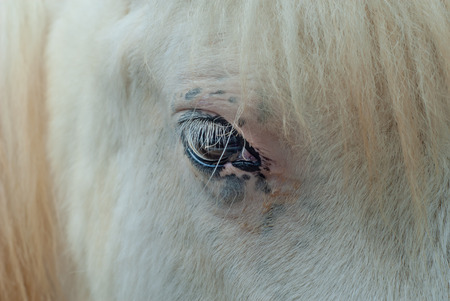 Detail of the eye of a young horse with white fur