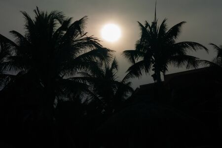 Photo in low light of a sunset between palm trees, on the beach of Tulum, in the Mexican peninsula of Yucatan