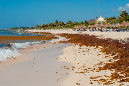 Tulum beach, invaded by seaweed, in the Mexican peninsula of Yucatan