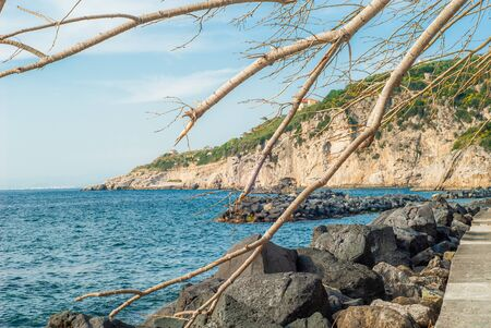 Sea and mountains, between the branches of a fallen tree, captured by the port of Massa Lubrense, near Sorrento