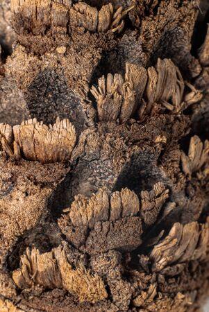 Woody textures of a pine cone, taken in Macro Stock fotó
